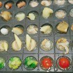 【めざましテレビ】たこ焼き器で絶品アレンジ調理法レシピ!小篭包などをmakoさんがを紹介!