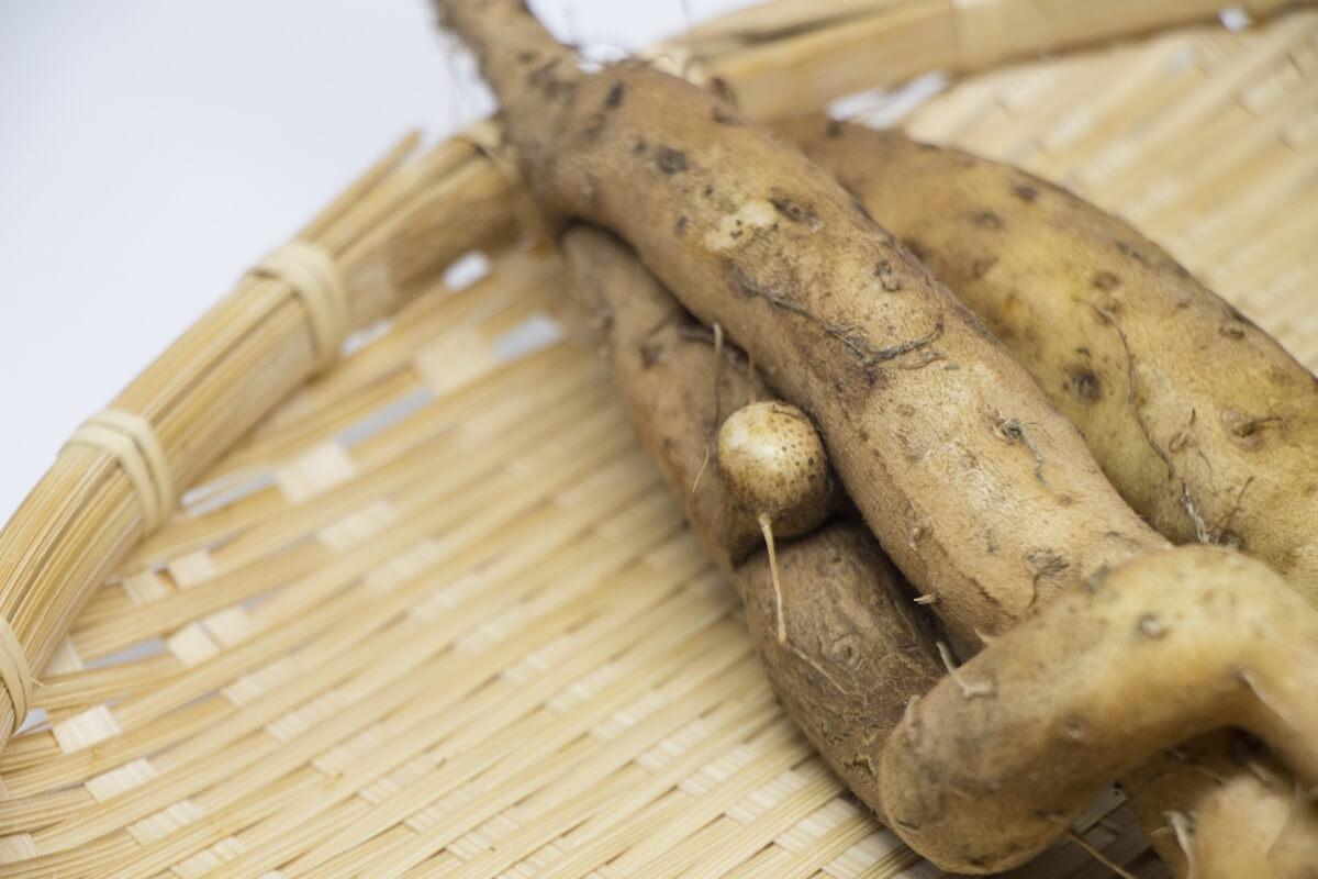 自然薯のかき揚げ
