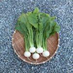 【3分クッキング】かぶとベーコンの黒こしょう炒めの作り方を紹介!小林まさみさんのレシピ