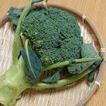 【きょうの料理】ブロッコリーマッシュの作り方を紹介!本多京子さんのレシピ