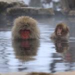 【土曜はナニする】冷え性改善の温活術のやり方を石原新菜さんが伝授!