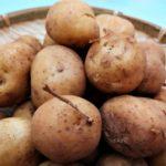 【きょうの料理】塩茹で新じゃがの作り方を紹介!小林まさみさんのレシピ