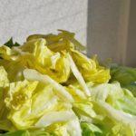 【きょうの料理ビギナーズ】ちぎりキャベツのごまだれの作り方を紹介!藤野嘉子さんのレシピ