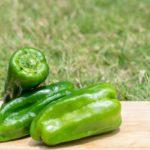【きょうの料理】ピーマンののり塩揉みの作り方を紹介!飛田和緒さんのレシピ