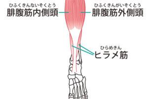 体幹バランスお尻を鍛えるトレーニング