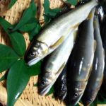 【おしゃべりクッキング】あゆの油淋の作り方を紹介!石川智之さんのレシピ