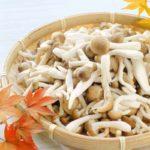 【きょうの料理】大原千鶴さんのレシピ!しめじの菊花和えの作り方を紹介!