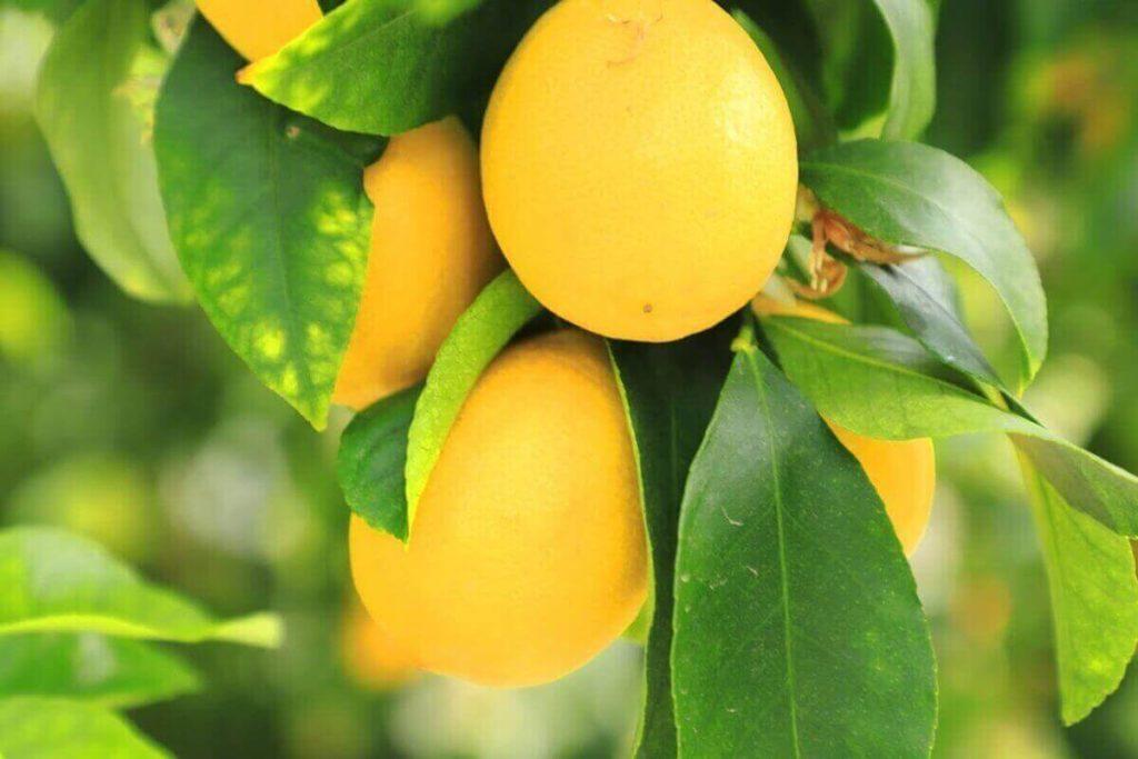 レモンがアツい!レモン味食品